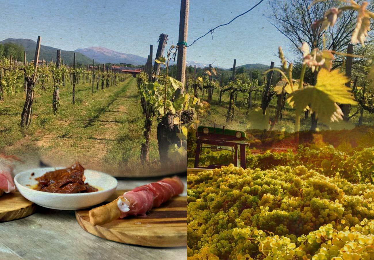 Agriturismo Terre Petrussa Wine e Beer. Il paesaggio